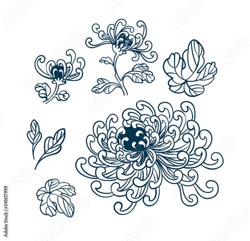 Fotografia, Obraz chrythantemum japanese chinese vector flower design elements