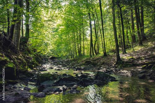 Fotografie, Obraz górski potok w pośród drzew w słoneczny dzień
