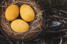 Yellow Eggs In A Ceramic Plate