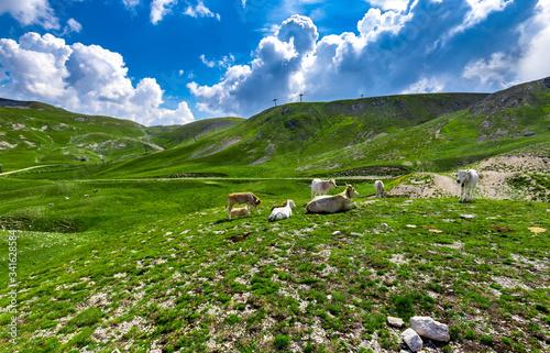 Obraz na plátně Parco Nazionale del Gran Sasso - Piccolo Tibet