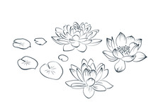 Lotus Sketch Vector Japanese Chinese Design Isolated Elements