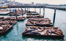 Relaxing Seals In The Pier Of ...