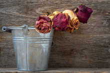 Dry Roses In Old Shabby Alumin...