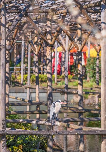 Japanese crane bird standing on a wooden pergola over the pond of the Kameido Tenjin shrine dedicated to Sugawara no Michizane the deity of studies Fototapeta