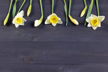 Spring Flowers Yellow Daffodil...