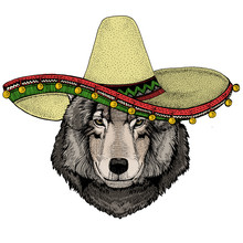 Wolf Portrait. Sombrero Mexica...