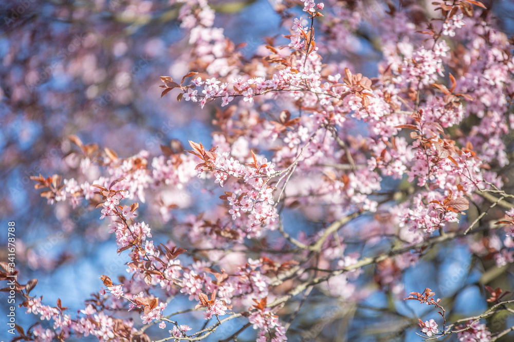 Fototapeta Różowe kwiaty na tle nieba