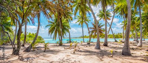 Stampa su Tela Palm trees on the beach of Fakarava, French Polynesia