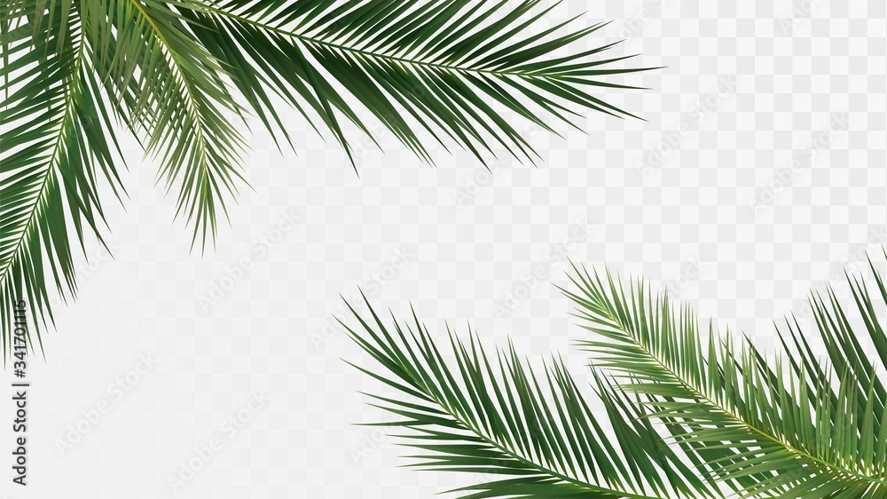 Fototapeta Palm branches in the corners, tropical plants decoration elements