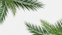 Palm Branches In The Corners, Tropical Plants Decoration Elements