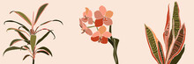 Art Collage Houseplant Leaves And Flowers In A Minimal Style. Silhouette Of Orchid, Sansevieria And Orchid. Vector