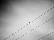 Low Angle View Of Bird On Cable Against Sky