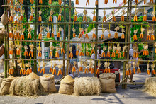 Hanging Corn For Drying, Dry F...