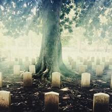 Tree In Graveyard