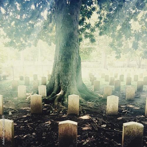 Valokuva Tree In Graveyard