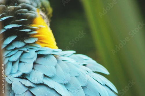 Photo Cropped Image Of Golden Blue Macaw