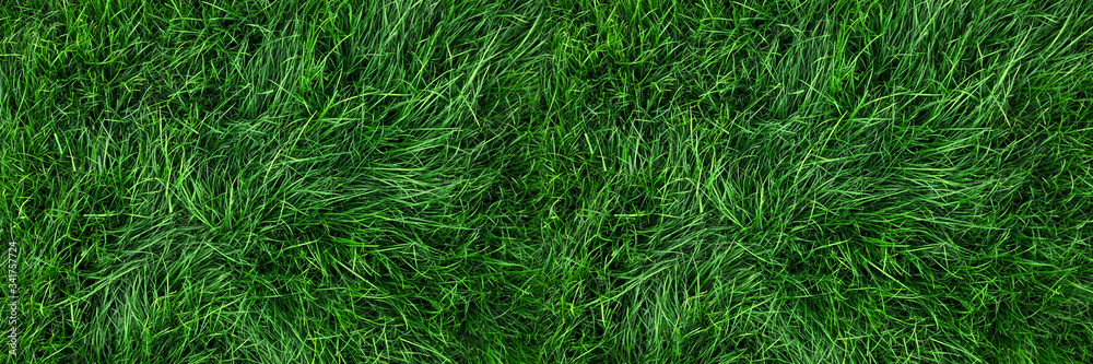 Fototapeta Natural green grass background, fresh lawn top view