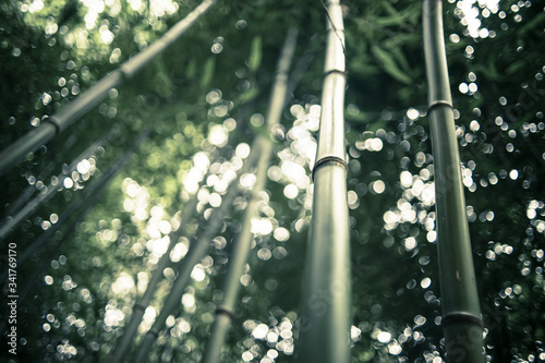 Fotografía Low Angle View Of Bamboos Growing In Forest Against Sky