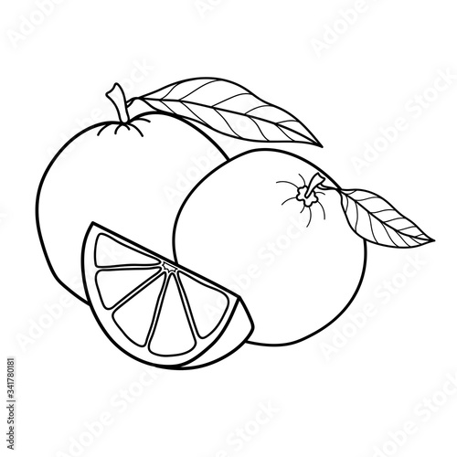 Obraz Linear drawing orange isolated on white background. Sketch for coloring booking page. Vector illustration - fototapety do salonu