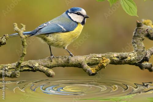 Fotomural Vögel 130