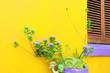 canvas print picture - Cape Town, South Africa - Yellow painted house. Green Plants. Colorfull wall. Bo-kaap.  color combination in architecture