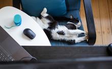 Cute Little Cat Sleeping In Bl...