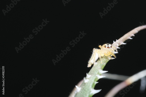 Fototapeta Naturaleza, vida y detalles obraz
