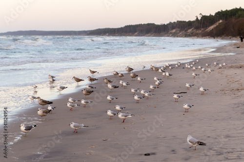 seagull colony Poster Mural XXL