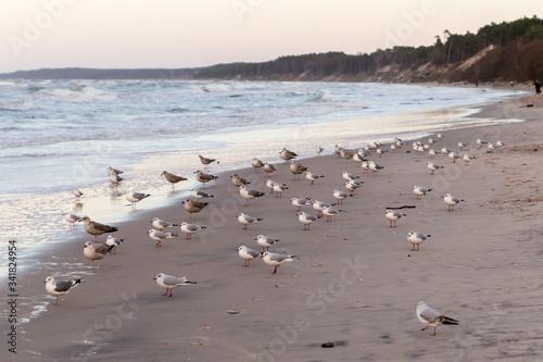 Fotografiet seagull colony