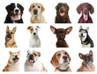 Set of different dogs on white background