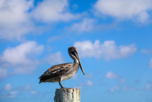 Pelican On Pole With Blue Skies And Clouds In The Florida Keys