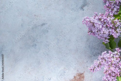 Fototapeta frame of branches and lilac flowers on a gray background .letterhead for postcards for spring, Easter, mother's Day, women's day, Valentine's Day. top view, place to copy obraz na płótnie