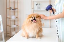 Female Groomer Taking Care Of Cute Dog In Salon