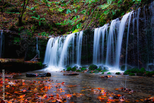 Autumn forest floor and waterfall in Japan