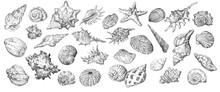 Hand Drawing Seashells Set Long