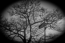 American Flag In Front Of A Tree