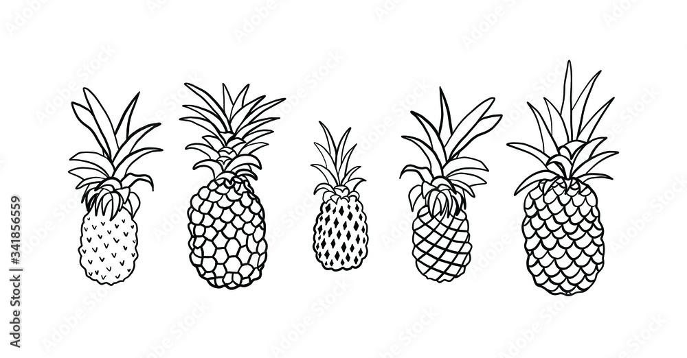 Fototapeta Vector engraving illustration of Pineapple tropical fruits