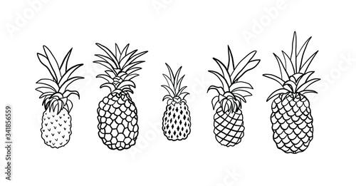 Fototapeta Vector engraving illustration of Pineapple tropical fruits obraz