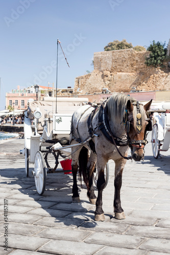 The horse carriage