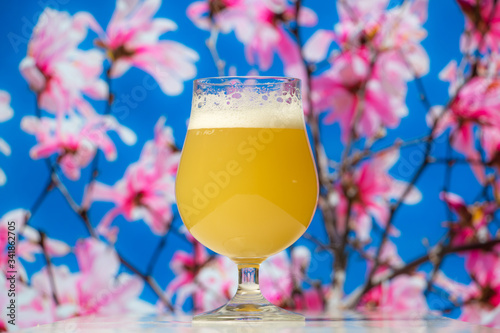 Hazy India pale ale beer in a tulip glass with a spring flower blossom tree in the background Canvas Print