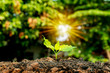 Small trees growing on the ground, the concept of plant growth and environmental protection.