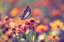 Vintage Butterfly. Butterfly O...