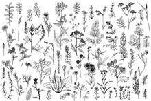 Wild Herbs, Drawn By A Black L...