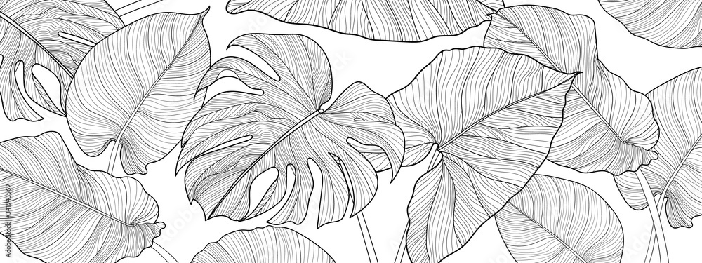 Fototapeta Nature background vector. Black and white floral pattern, Split-leaf Philodendron plant with monstera plant line arts, Vector illustration.