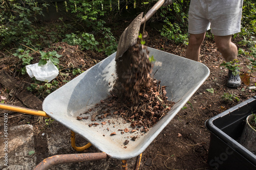 Photo Dead leaves being shoveled into a wheel barrow in a garden