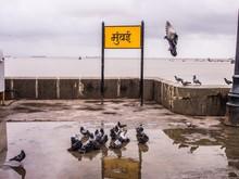 Pigeons On Promenade By Mumbai...