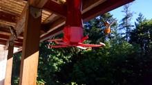 Hummingbirds Flying Around Bird Feeder