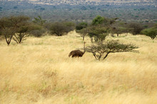 Panorama Della Savana Africana