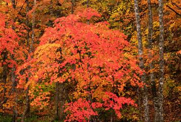 Fototapeta Jesień Autumn colorful forest view