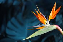 Bird Of Paradise Tropical Flow...